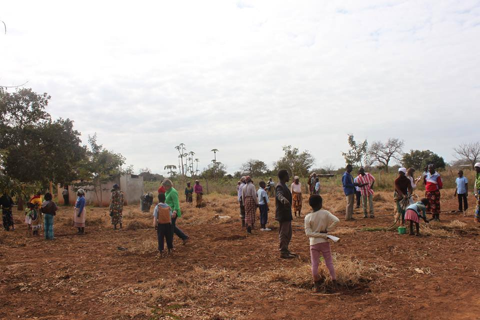 Plantação de Moringas
